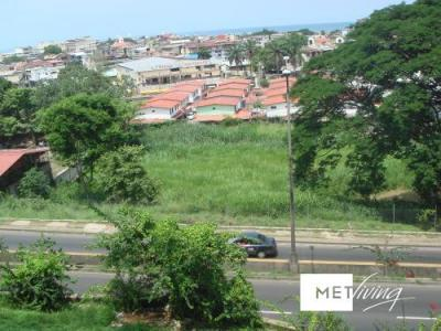 104377 - lote