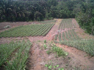 12775 - La Chorrera - farms
