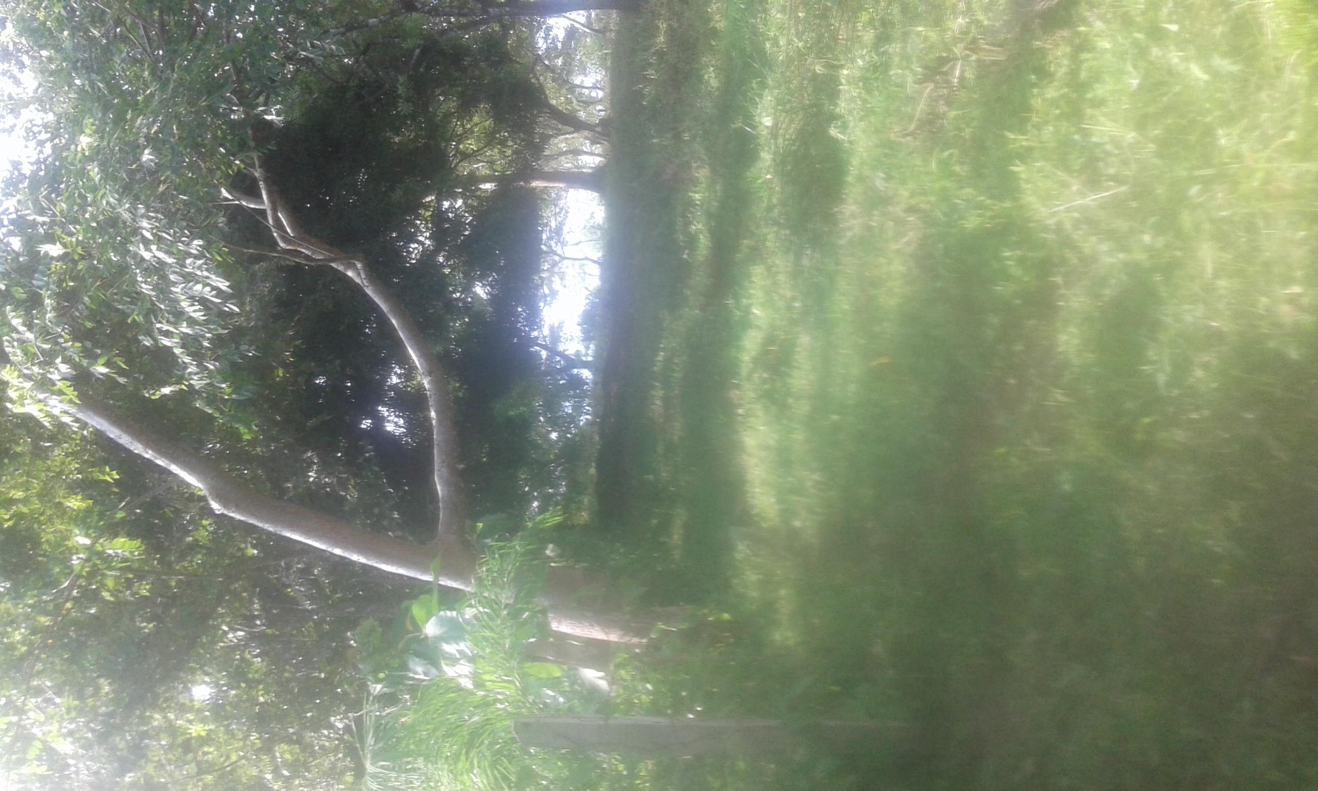 Vendo barata finca en las palmas p26402 inmopanama - Casas terreras de alquiler en las palmas baratas ...