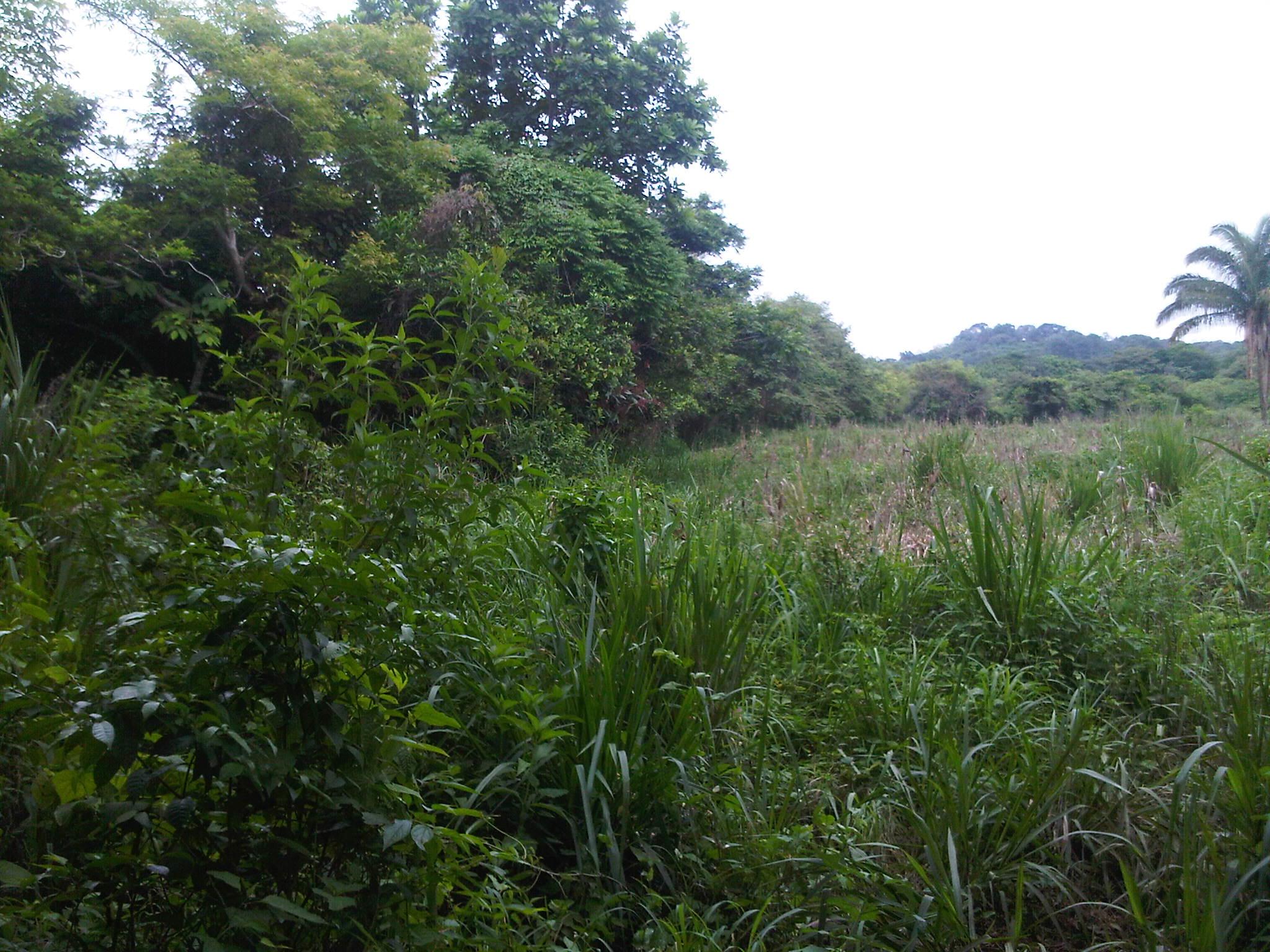 Se vende 3 5 hectareas en la chorrera exelente para - Fincas rayan ...